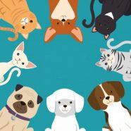 Profile picture of CatDog Center